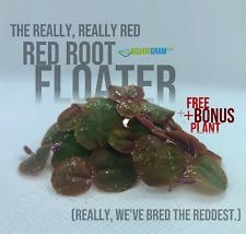 30+ Leaf Red Root Floaters (+Free Bonus Plant) Live Aquarium Floating Plant