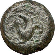 SYRACUSE 344BCSicily Athena Cult  Sea horse Rare Ancient Greek Coin  i27058