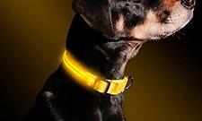 Collare Regolabile Per Cane Con Luci Al Led Taglia S con Anello D-Ring GIALLO