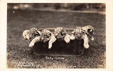 EL MONTE CALIFORNIA BABY LIONS CUBS AT GAYS LION FARM~REAL PHOTO POSTCARD 1930