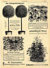 M. Petersheim Erfurt Blumengärtnereien Lorbeerbäume grünblühende Rosen Calla1902