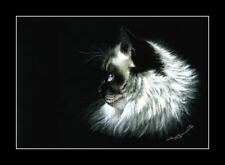 Ragdoll Cat Print Serious by I Garmashova