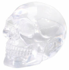 Small Translucent Skull.Clear Crystal Like Human Head Bust Statue Figurine