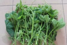 Pumpkin seedling seeds winter squash organic heirloom garden Vegetable NO-GMO