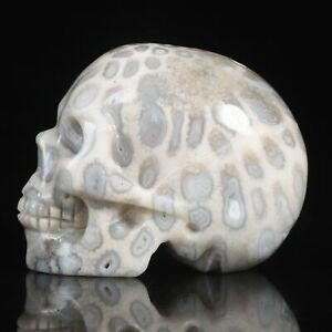 "1.93""Natural Coral Fossil Carved Skull Metaphysic Healing Power #33F07"