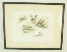 LAURE D'AMBRIERES - Illustration canards colsverts - Peintre animalier - Signé