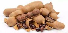 30+ Tamarind Seeds Fresh Organic Fast Growing Tropical Seasonal Tree seeds