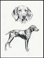 Hungarian Vizsla Lovely Dog Sketch Print Poster