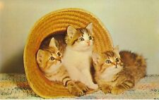 """VINTAGE 1900'S ERWIN HOTEL """"KITTENS IN THE STRAW"""" POSTCARD"""