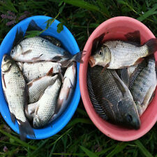 Night Fishing Luminous Popper Floating Lure Catfish Snakehead Bass Bait