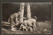 EN PERIGORD (24) APPRENTI Cochon Chercheurs de Truffes