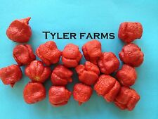 20+ Trinidad Moruga Scorpion Pepper seeds - Organic world's hottest chile, chili