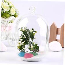 Glass Vase Hanging Terrarium Succulents Plant Landscape Home Decor Gift CR5J
