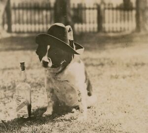 ck06 dog & McCallum's scotch whisky 1922 Prohibition photo by Jeffares Vancouver