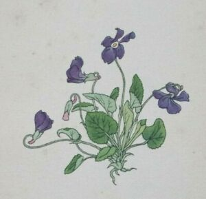 Violet, Viola : Original 1938 Hand-Coloured Etching by FRITZ KREDEL