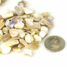 Mini Mosaic Tiles Minute Mother of Pearl Conch Shell Natural Full Glossy 100+ g