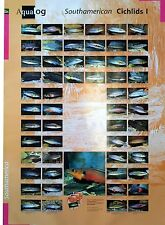 AQUALOG: Poster Cichlids 1 (Pikes + Other Large Cichlids) LAMINATED