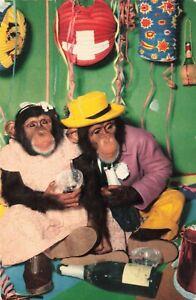 Postcard Chimpanzees Celebrating
