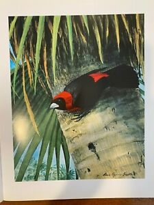 "Louis Agassiz Fuertes & The Singular Beauty of Birds, ""Crimson-collared Tanager"""