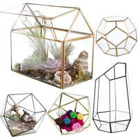 US Geometric Fern Moss Succulent Glass Terrarium Plant Pot Box for Wedding Decor