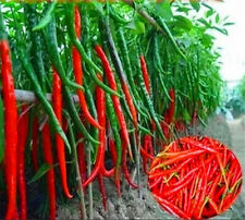 50Pcs Red Spices Spicy Chili Pepper Seeds Healthy Home Garden Vegetable Chilli