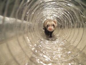 Best Ferret Toy EVER! Jumbo Ex Wide &Long Super Thru Way Crinkle Tunnel Tube