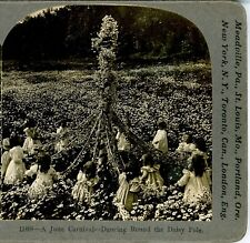CHILDREN, Dancing Round the Daisy Pole--Keystone #11404 Black & White Photo