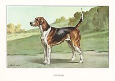 1930s Castellan France Rare Beautiful Dog Art Watercolor Print English Foxhound