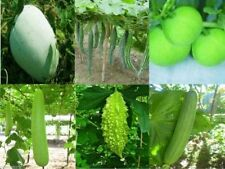 6 In 1 Gourd Seeds BITTER, BOTTLE, RIDGE, SNAKE, Ash/Wax & Apple Gourd Seeds