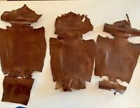 """5 Genuine  Red Glazed Lizard  skins For Leather  Craft  Hides  14 To 18/"""" Long"""