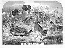 Hunting Grouse Shooting, Prairie Hen Dogs Pointers Hunt