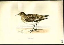 1870 ORIGINAL Hand Colored Bird Plate RARE Sanderling
