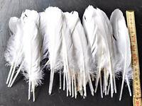 25 x Vogelfedern Feder 16-18 cm lang Federkiel Weiß Federn Schreibfeder Basteln