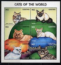 LESOTHO, Sc #1105, MNH, 1998, S/S, Cats, pets, CA98F