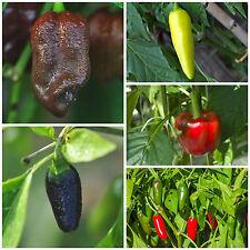 OFFERTA 5 diverse varietà di peperoncino chili semi clemenza varietà semi Chili