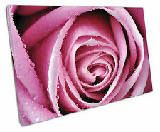 BIG WATER PINK ROSE CANVAS WALL ART PICTURE LARGE 75 X 50 CM