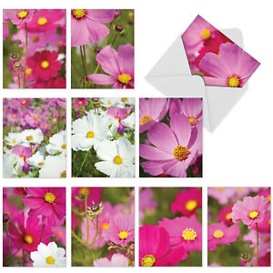 10  All Occasion Blank Cards Assortment - COSMOS-POLITAN M6029