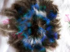 10Stk. Pfauenfedern Naturfedern Federn Natur Pfauen Pfauenfeder  Deko 4-7cm