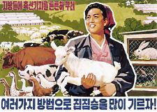 North KOREA Anti-American Propaganda Poster Print A3 + #D020