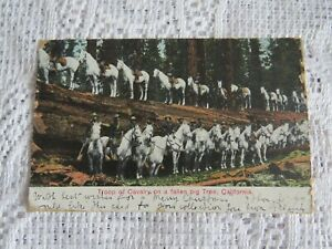 VINTAGE POSTCARD TROOP OF CAVALRY ON A FALLEN TREE CALIFORNIA USA 1906 STAMP