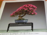 Very Rare ! The 85rd Bonsai Exhibition book from japan japanese #0670
