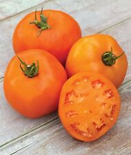 Yellow Tomato - SUMMER APRICOT - 20 Heirloom Vegetable Seeds