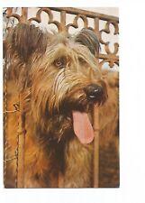 POSTCARD DOGS , CHIENS , BERGER DE BRIE