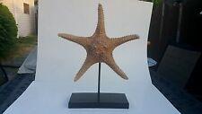 "Giant Starfish Professionally Mounted Large 13"" Pedistal To Black Base 10""X4""x1"""
