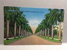 Palm Avenue Miami Sunshine State Florida Trees Vtg Postcard Linen Unposted Color