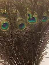 """25*Natural Peacock Eye Feathers For Floral Decorations- 31-33"""" / 79-84 cms Long"""