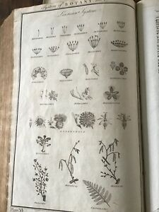 Antique Print C 1770 - Large - BOTANY - System Of.. Tab 1 Natural History