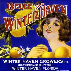 Winterhaven FL Belle of Winterhaven  Orange Citrus Fruit Crate Label Art Print