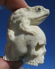 Schädel, skull mit Kröte aus Horn geschnitzt memento mori - Wunderkammer !