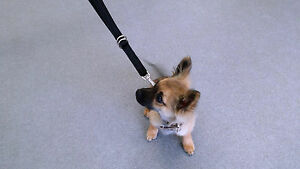 PUPPY 3 IN 1 TRAINING LEAD USED BY TRAINERS AT LONGEST LENGHT 6 FEET